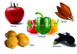 HORTOMALLAS, chile en invernadero, malla para soporte agrícola, envarado de hortalizas, malla para entutorar, envarado, entutorado, rafia, malla espaldera, malla tutora, malla para entutorar, hortalizas, cultivo de tomates, rafia, pita